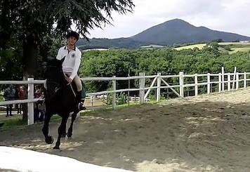 Cavaliere in campo su cavallo Murgese