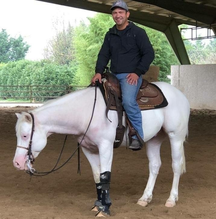 Paint Horse montato