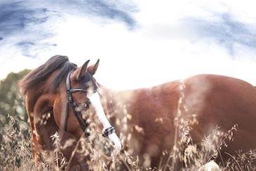 Cavallo nell'erba fiorita