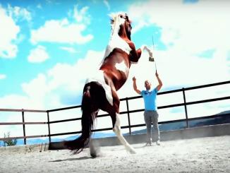 Cavallo impennato con addestratore