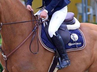 Cavallo e cavaliere in concorso