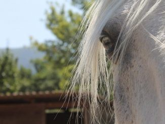 Occhio del cavallo