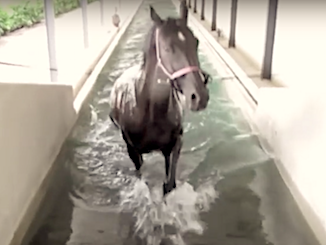 Idroterapia cavallo in piscina