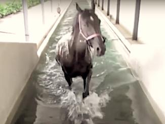Idroterapia cavallo in piscina