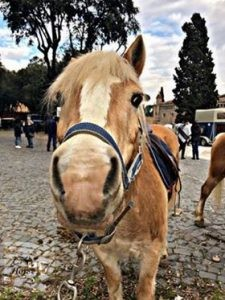 Carosello Haflinger 1 cavalli - Roma