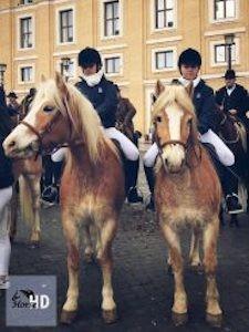 Carosello Haflinger 2 cavalli - Roma