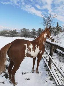 Paint Horse Overo