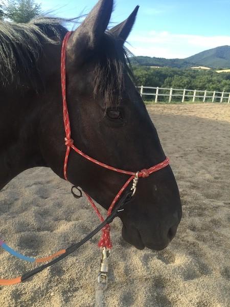 Profilo Cavallo Murgese