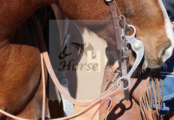 Quarter Horse con morso