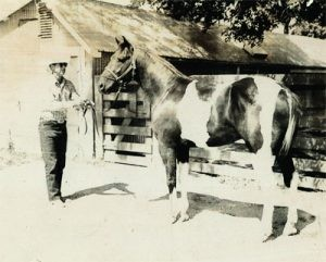 Badis Pinto - Il primo Paint Horse registrato