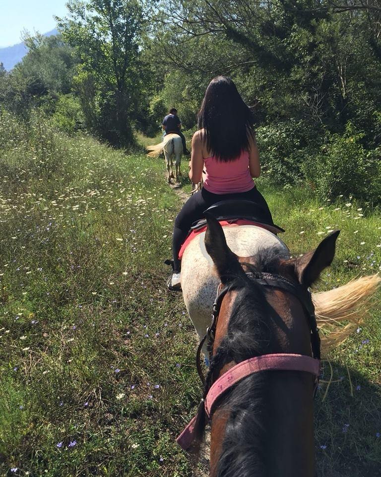 Cavalli montati in passeggiata
