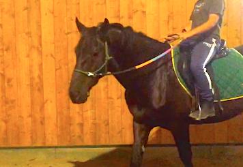 Bambino su cavallo Murgese