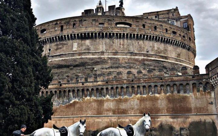 Due cavalli Lipizzani a Roma