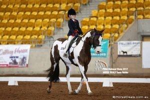 Dressage con Paint Horse