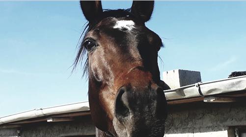 Foto cavallo - Prima Classificata concorso Horse HD