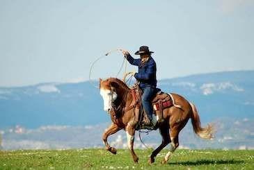 Cowboy su Paint Horse